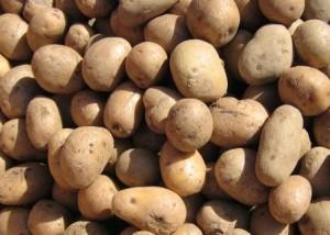 ipotatoes
